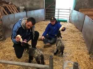 Bottle-feeding orphaned lambs