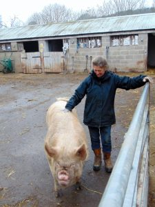 Livestock manager Sue with one of the pigs