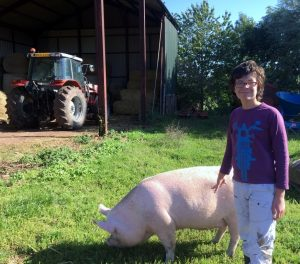 Looking after the pigs