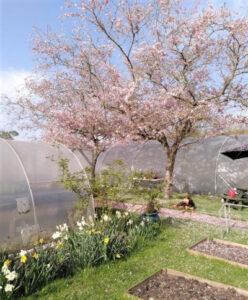 Elm Tree Farm gardens in spring